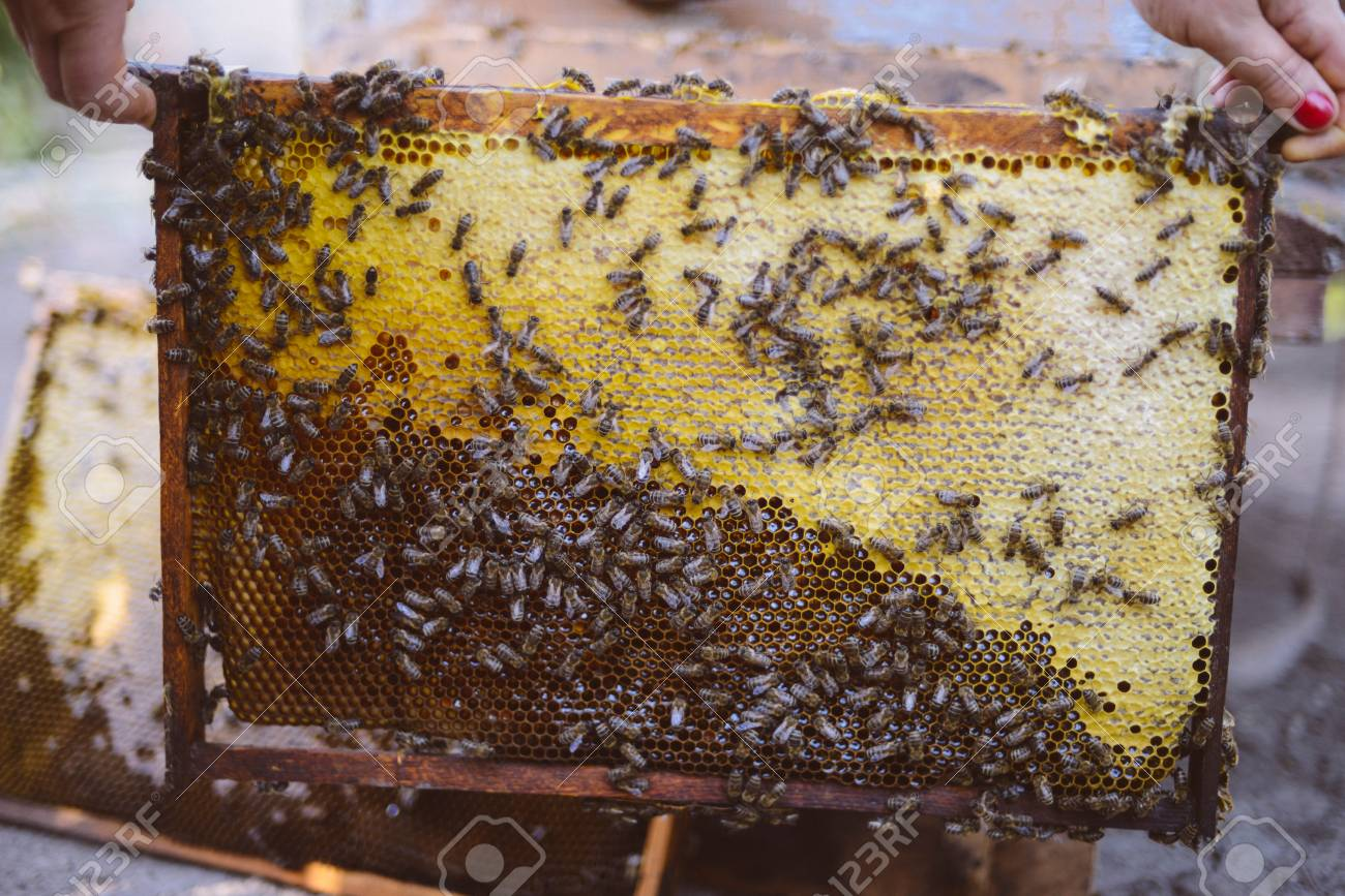 Frames Of A Bee Hive. Beekeeper Harvesting Honey. The Bee Smoker ...