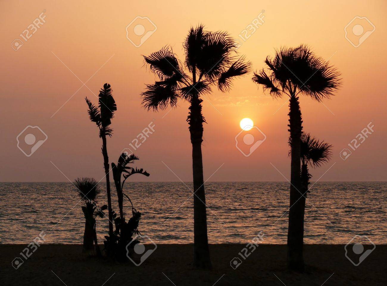sunset with palm tree silhouette in Chipiona, Andalusia  Spain Stock Photo - 20243002