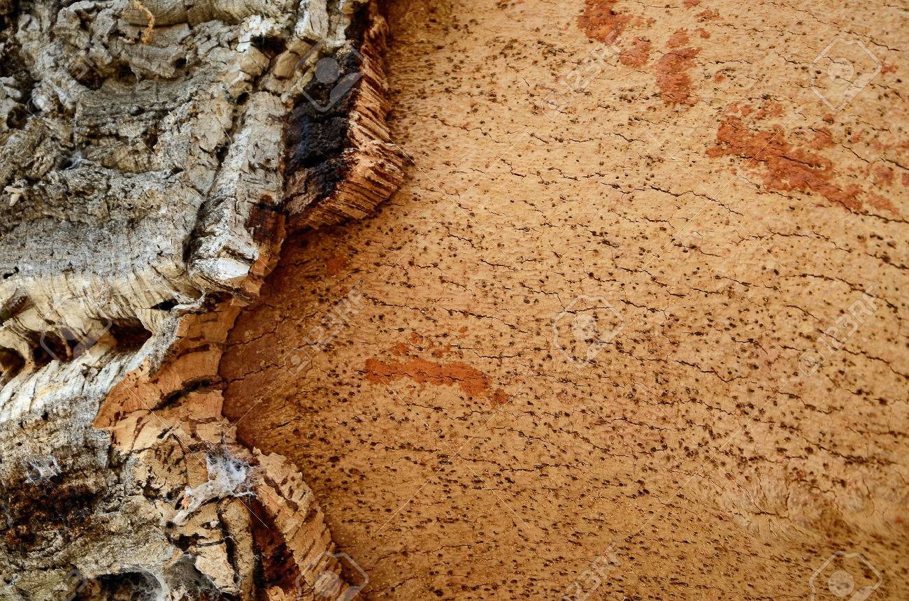 Tronco De árbol De Corcho - Quercus Suber - Despojado De Corcho En ...