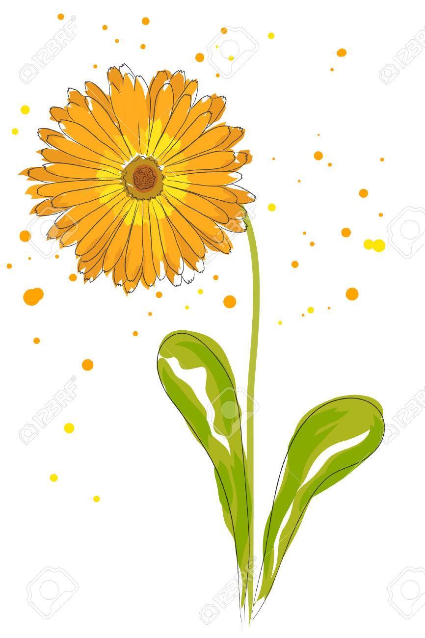 beautiful blossom watercolor orange calendula on white background Stock Vector - 8302301