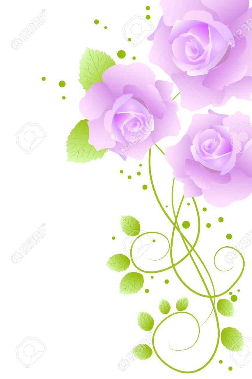 beautiful purple blossom roses on white background Stock Vector - 9242433