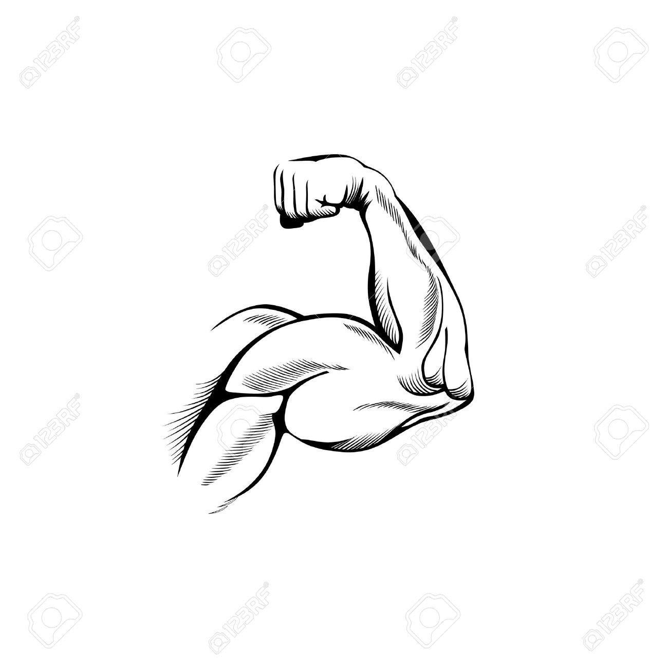 on white   biceps  body  Flexing Bicep Drawing