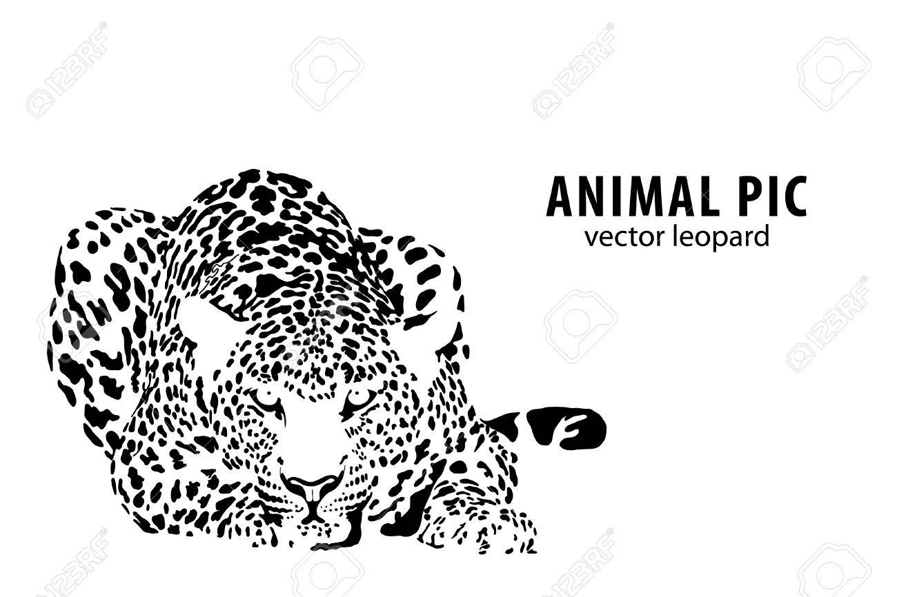 a leopard on white background - 9675159