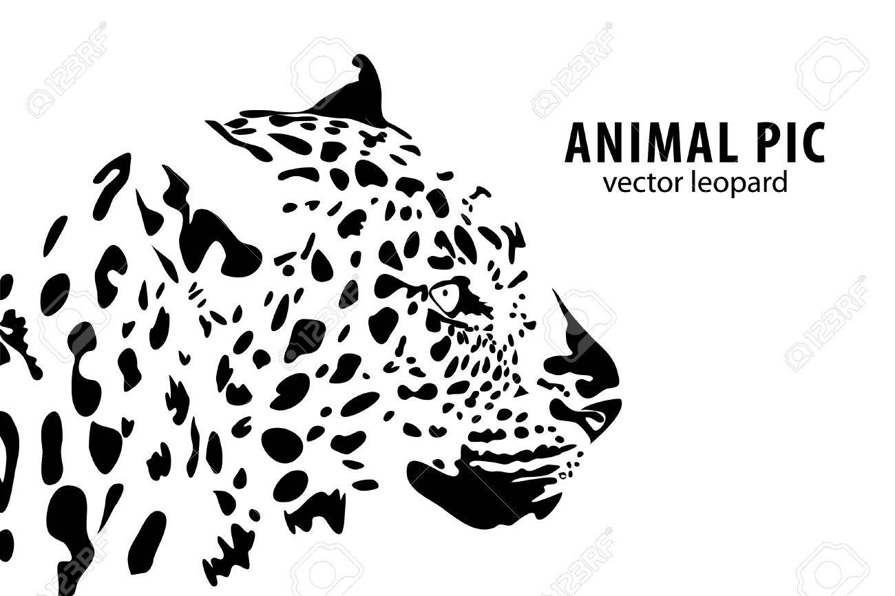 a leopard on white background Stock Vector - 9675157