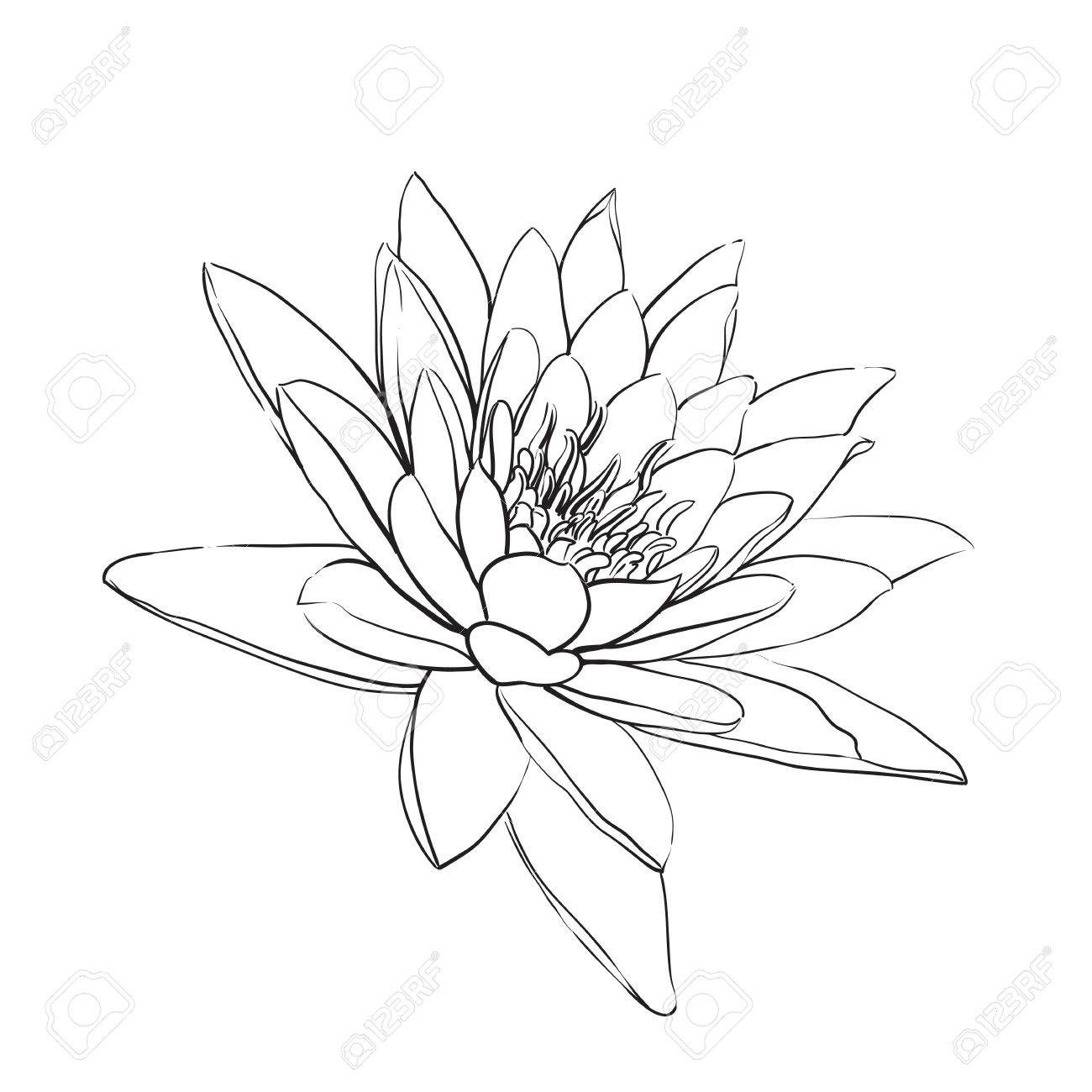 Outline lotus flower on white background royalty free cliparts outline lotus flower on white background stock vector 43744777 mightylinksfo