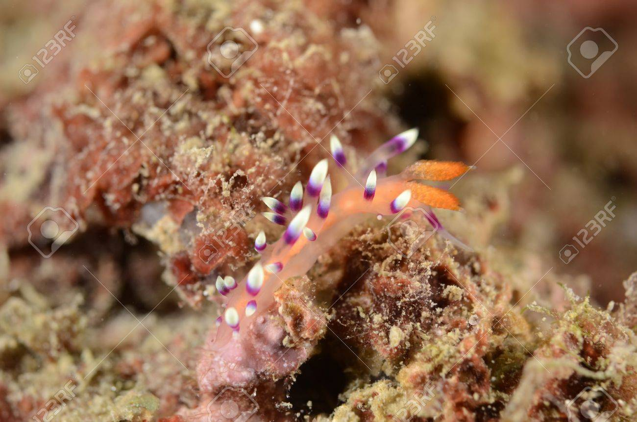 Sea slugs Stock Photo - 19636278