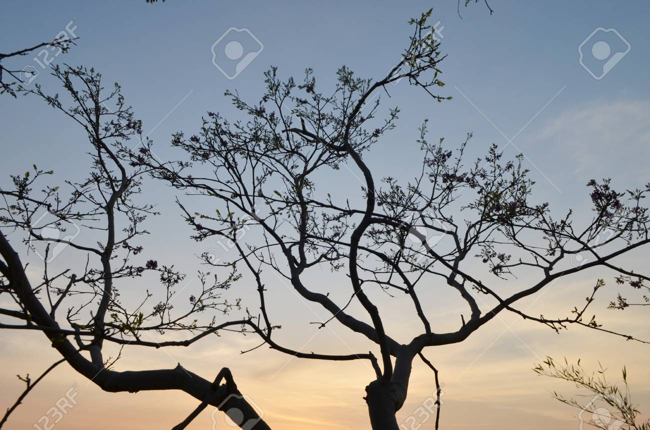 back tree and mountain landscape at Sunset Stock Photo - 14050083