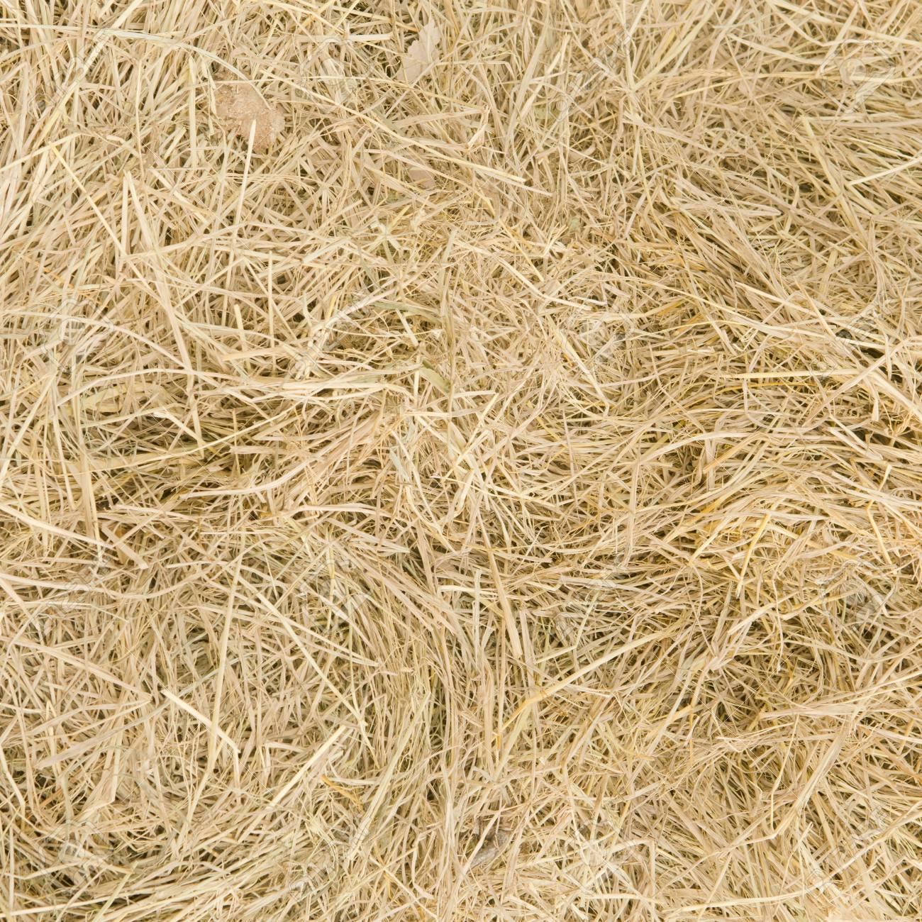 Straw texture background Stock Photo - 19132211