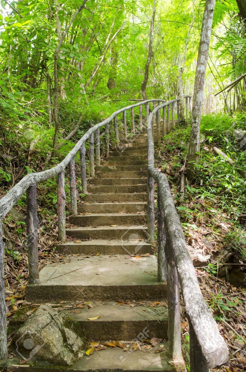 Lighting Tree Trail - 21676756