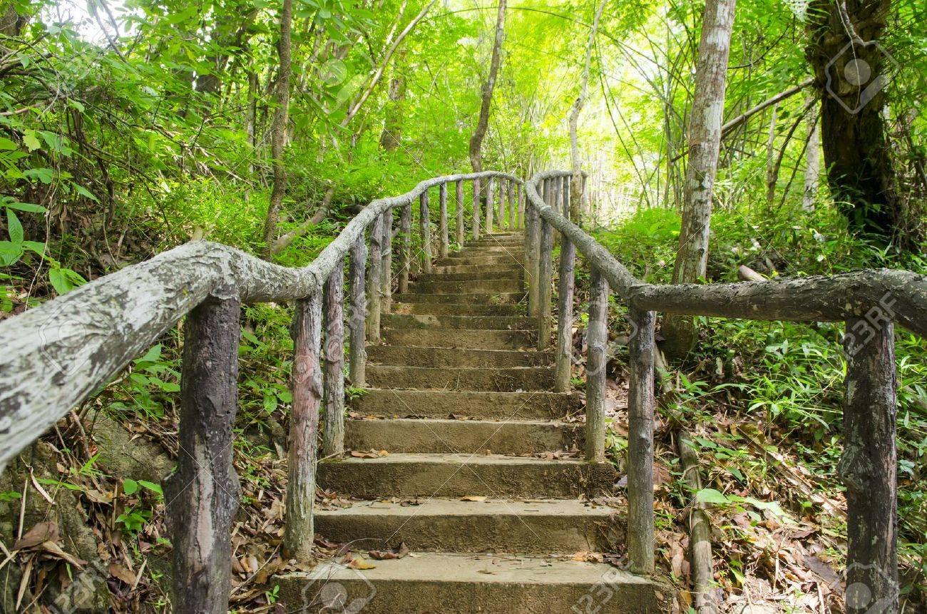 Lighting Tree Trail - 21676757