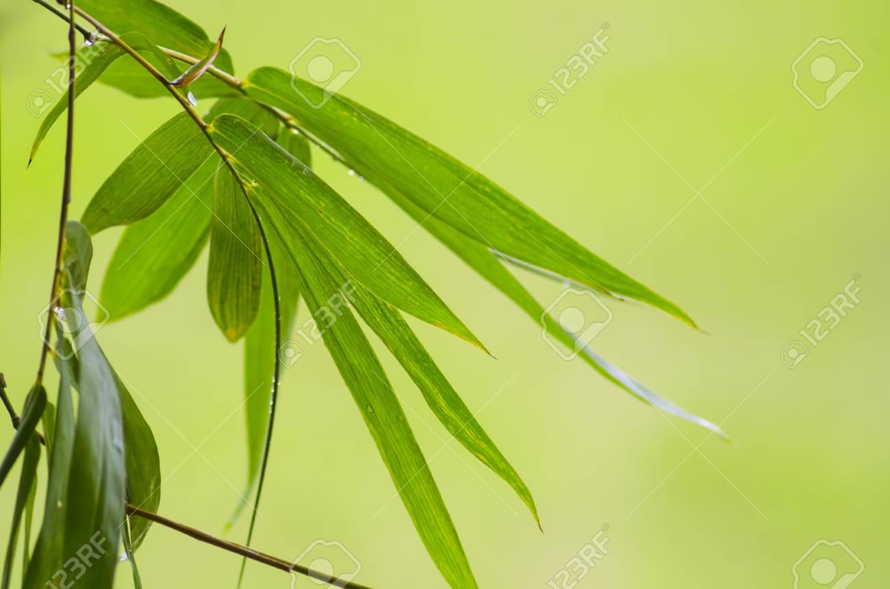 Foglia Di Bamb.Verde Foglia Di Bambu Astratto