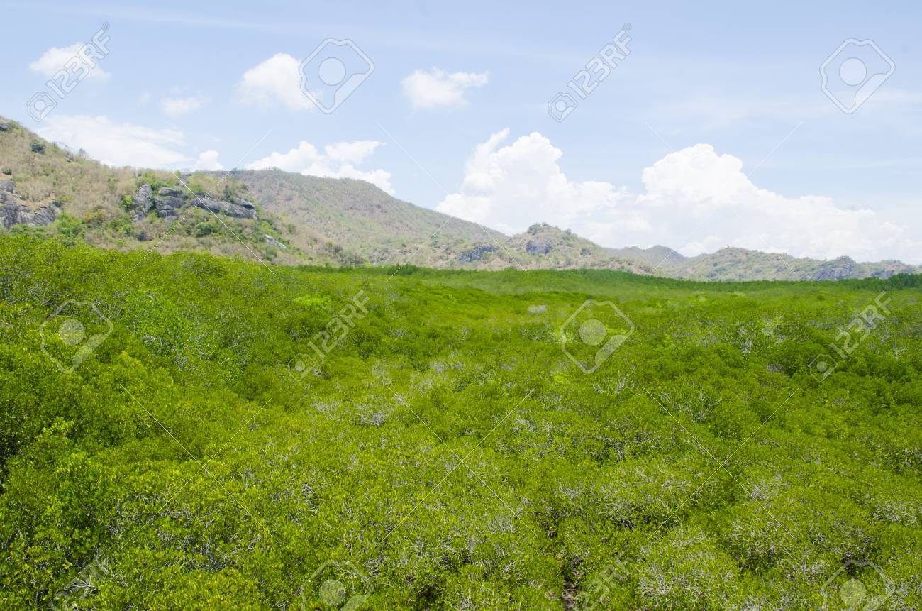 The forest mangrove at Petchaburi, Thailand. Stock Photo - 24615347