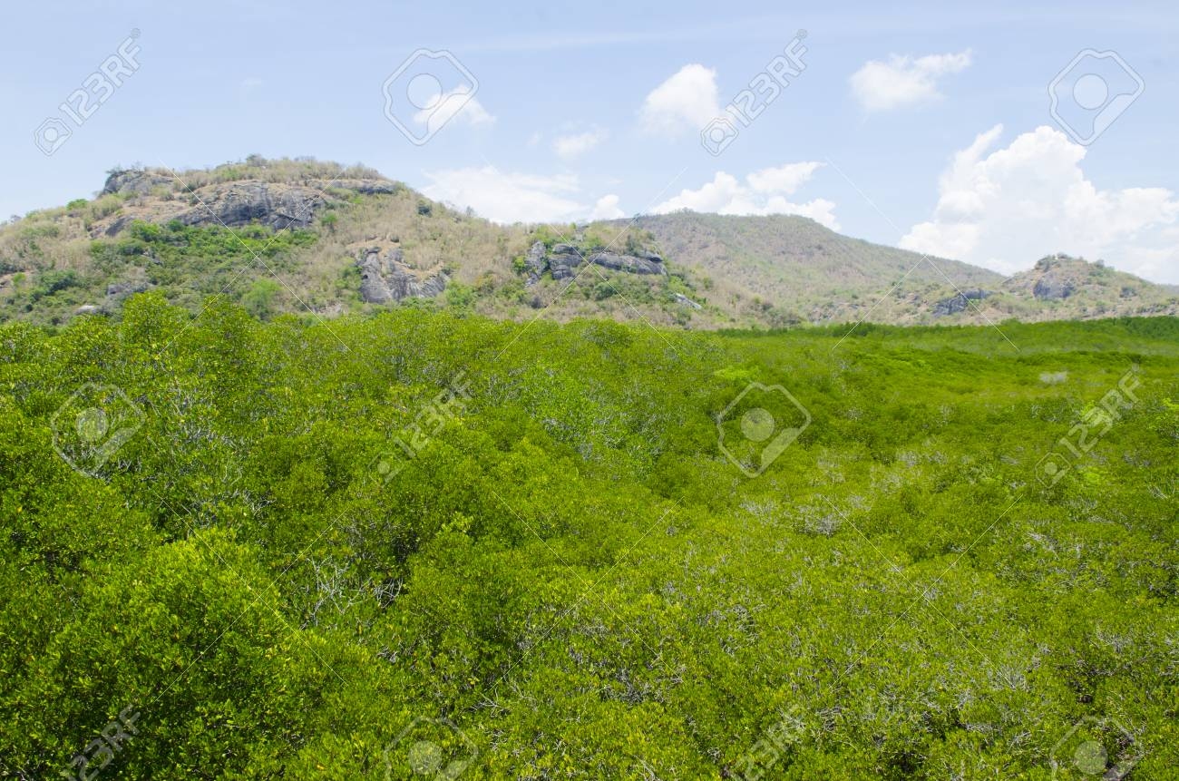 Wooden path in mangrove forest Stock Photo - 24992690