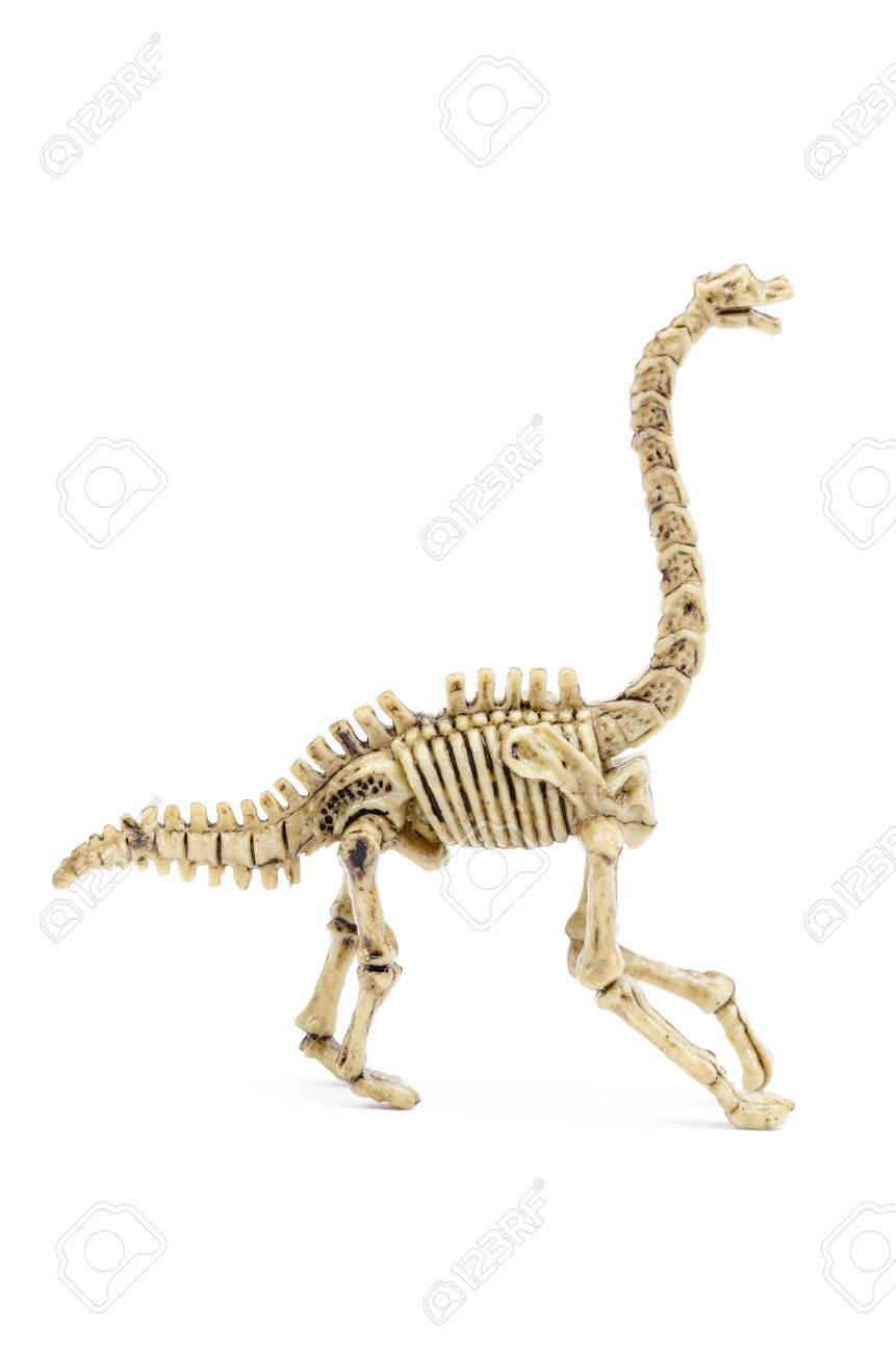 Dinosaur skeleton To science education, isolated on white with