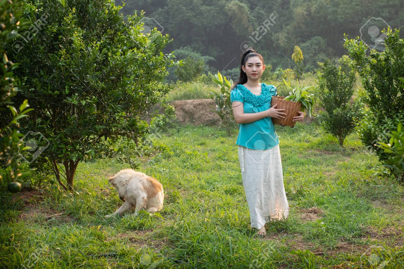 Front young gardener Asia woman smiling and carrying the basket Thai in the honey tangerine oranges garden, Happiness and healthy lifestyle concept - 144368758