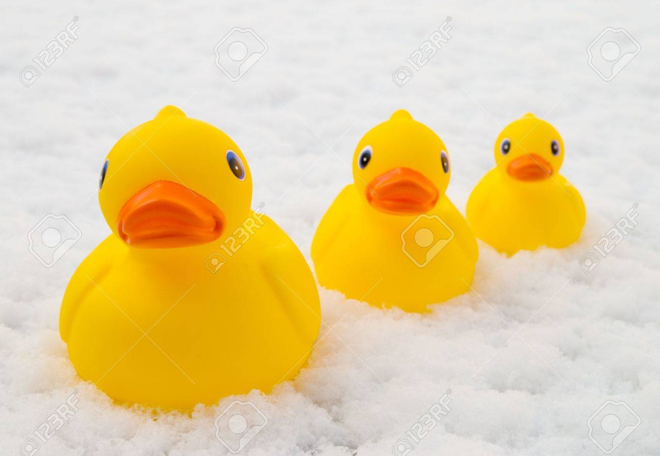 A Group Of Rubber Duck Bath Toys Out For A Swim On A Snow Covered ...