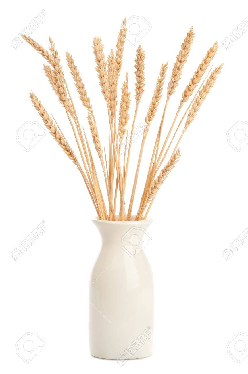 Stalks of wheat in vase on white background Stock Photo - 7701229