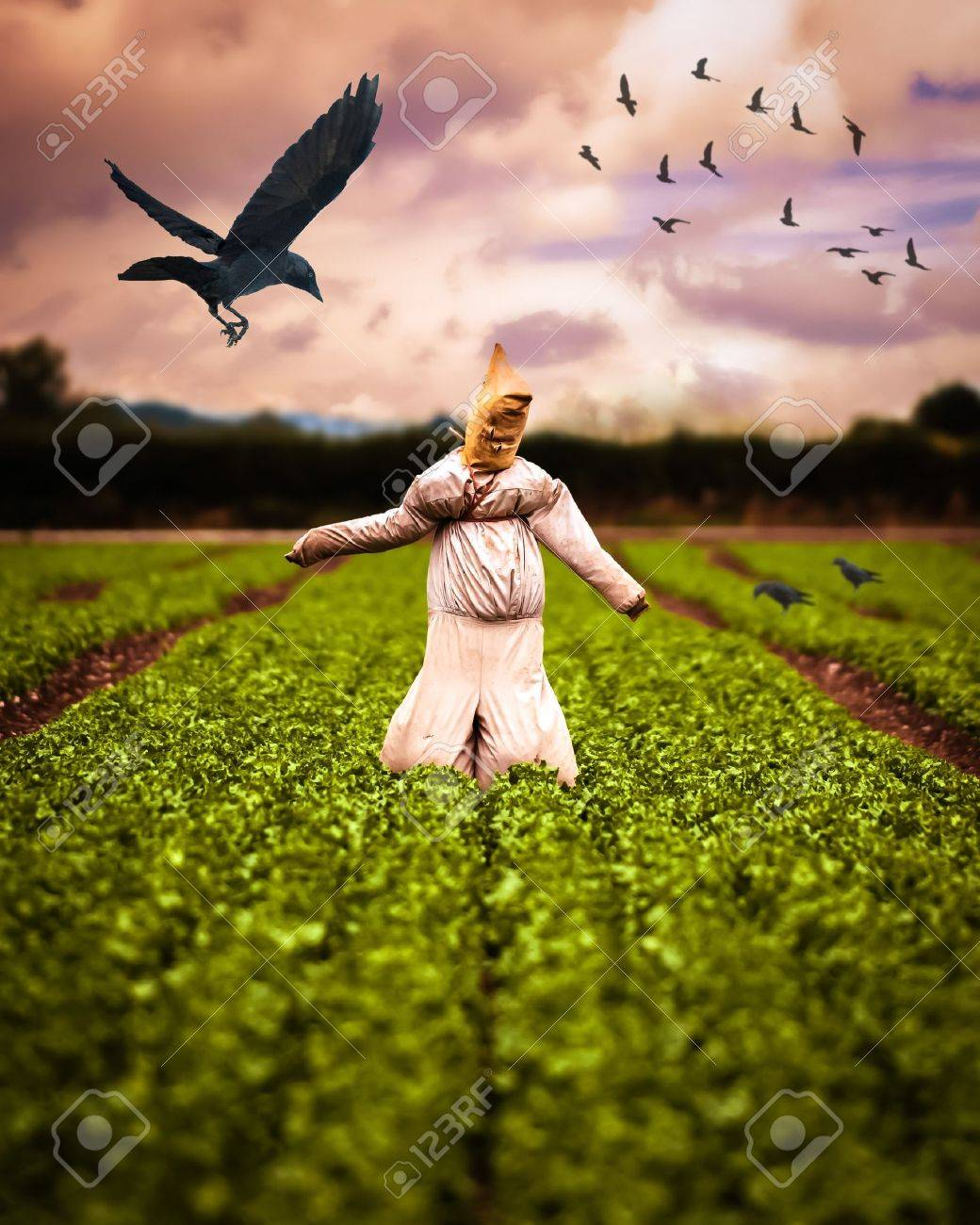 Scarecrow in field of crops with crows - 15409204