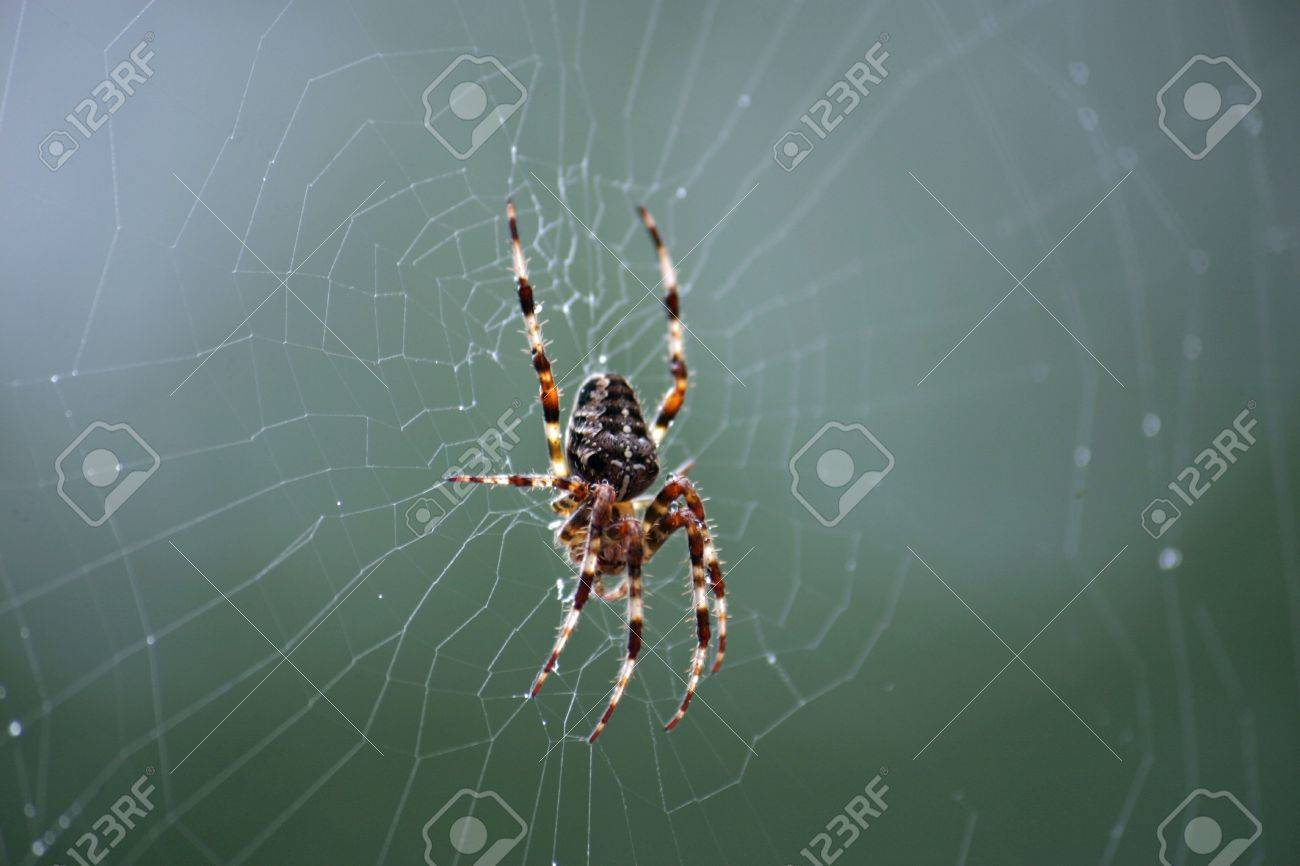 A Close Up Of A Spide In It's ...