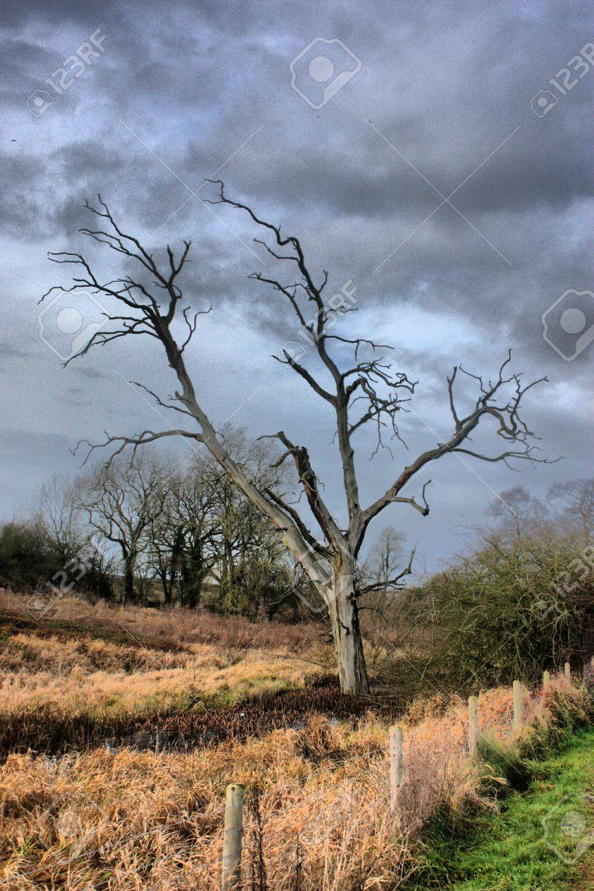a dead tree against a moody grey sky Stock Photo - 18194301