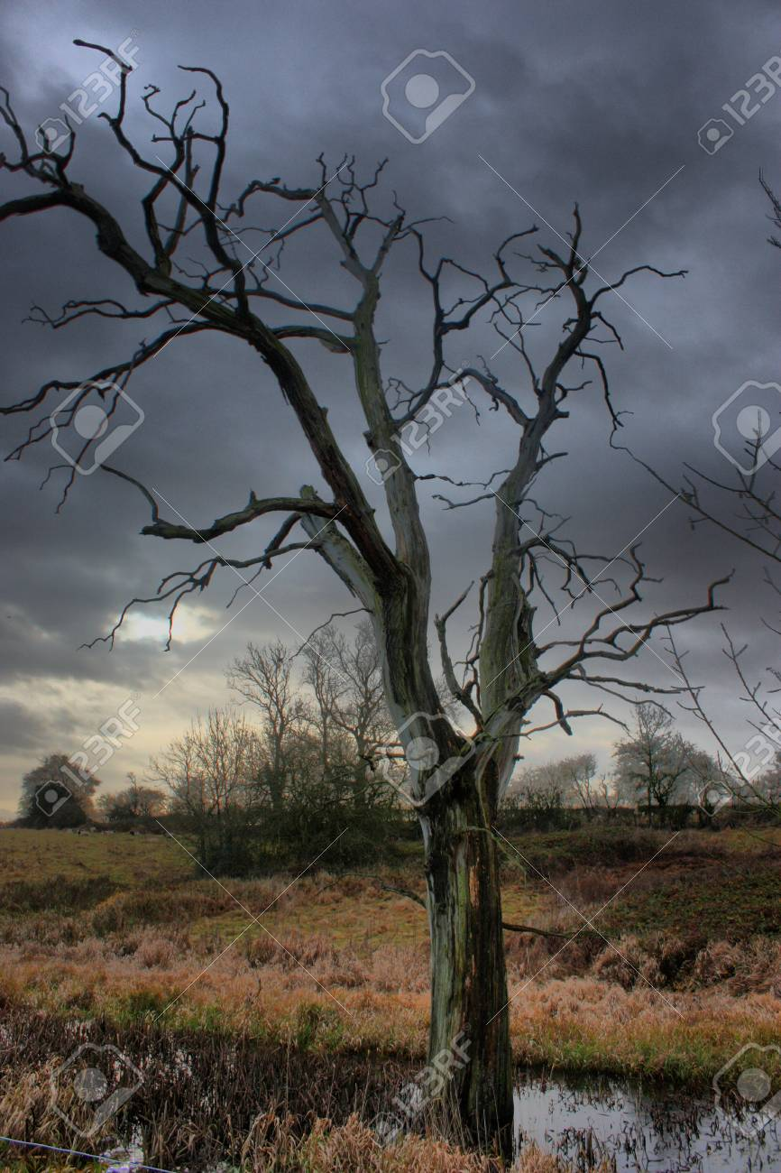 a dead tree against a moody grey sky Stock Photo - 18194295