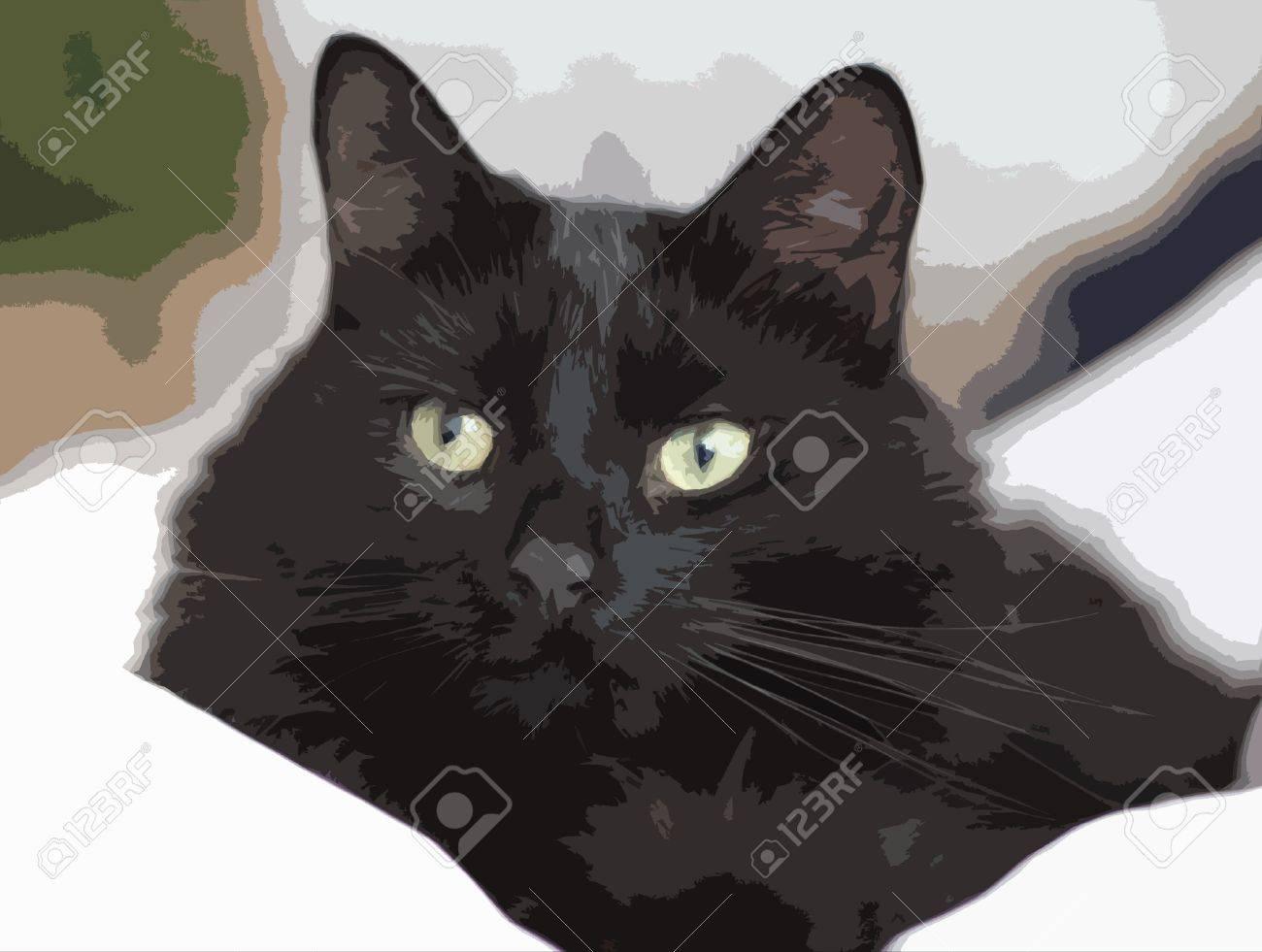 Blck pussy cat
