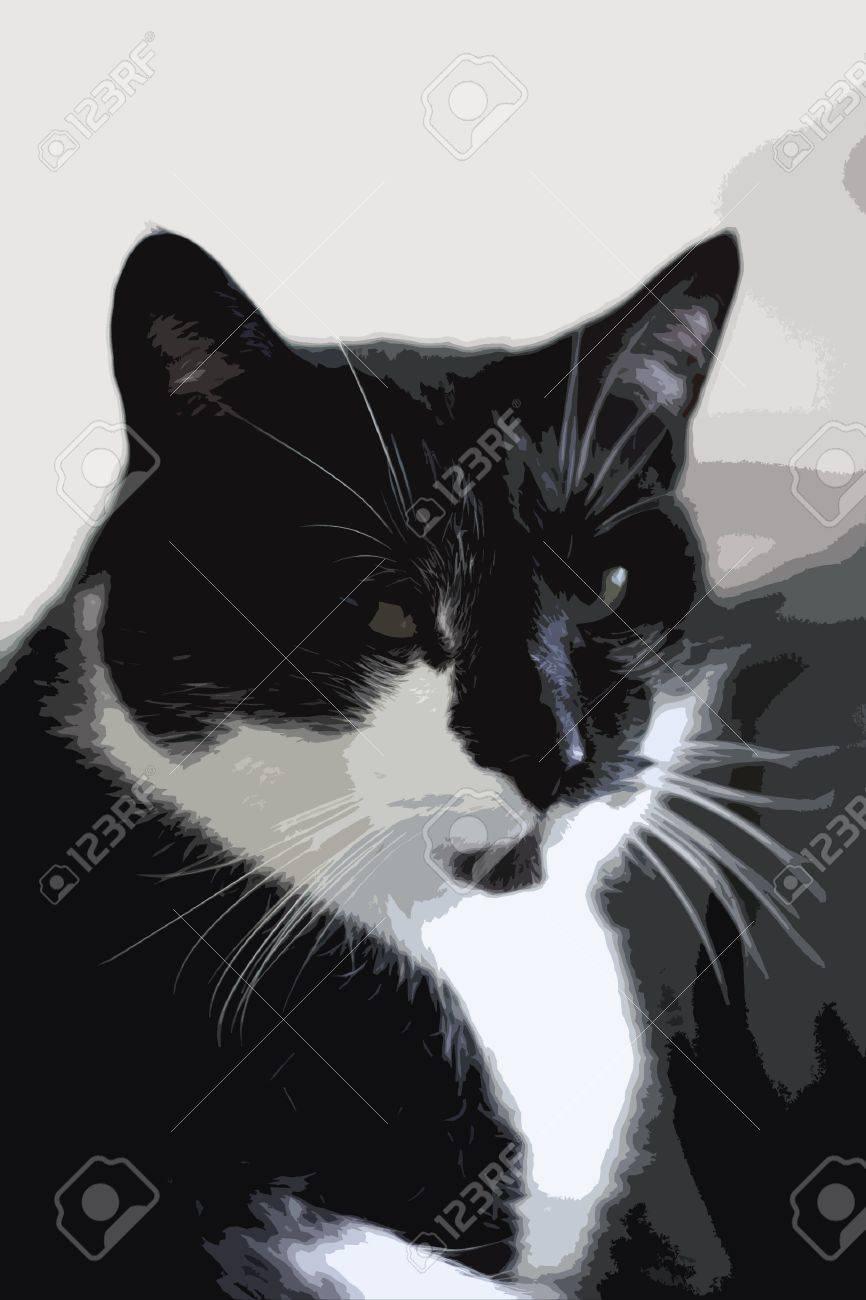 noir chatte com amateur noir porno vidéo