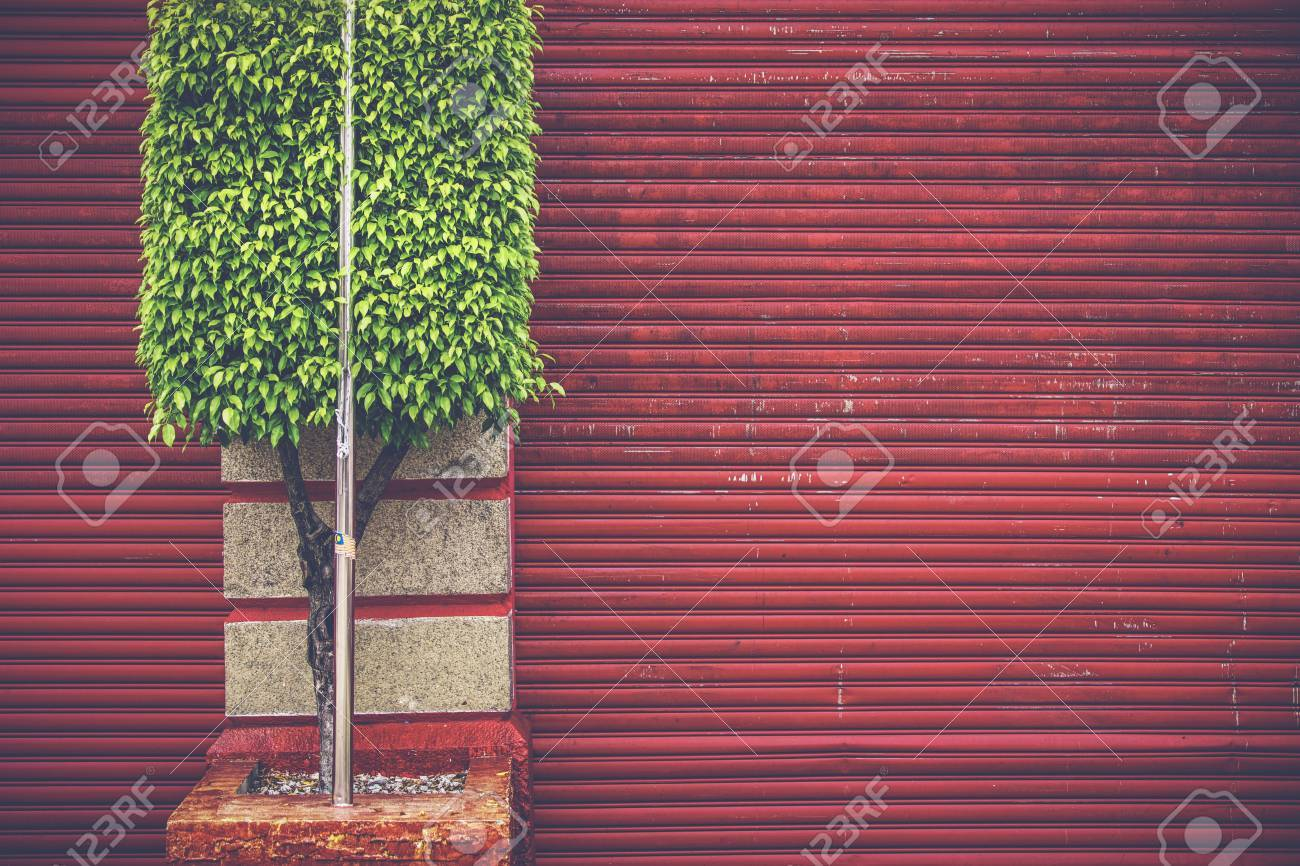 Green on red - Street photography in Penang showing a old red jalousie and a green square cut tree. Stock Photo - 50157395