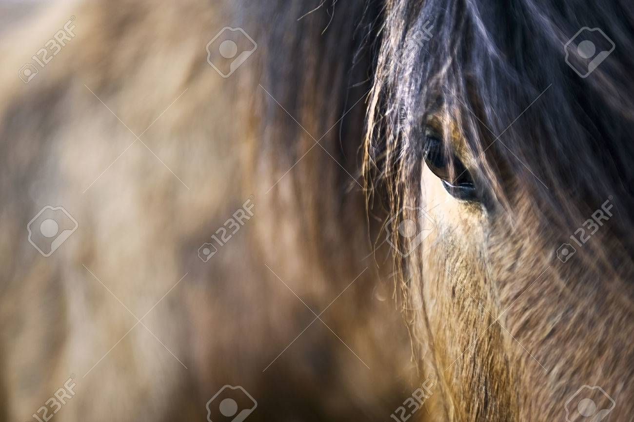 Brown horse close up - Image showing detail of brown Iceland horse, including part of the head and body. Stock Photo - 51566213