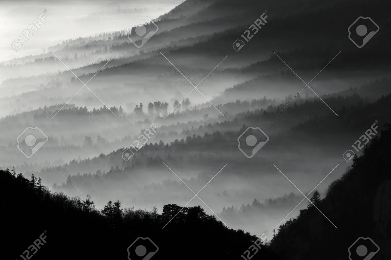 Misty forest - Stunning image, showing many layers of pine tree forest on a misty autumn morning. Stock Photo - 51566538