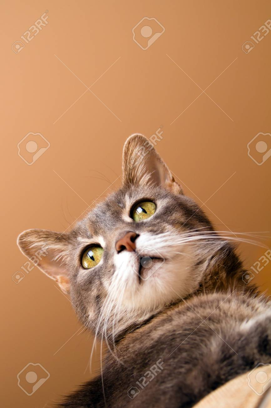 a cat with yellow eyes. Stock Photo - 18721976