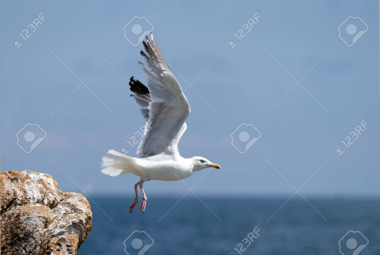 seagull, soaring in the blue sky Stock Photo - 18722161