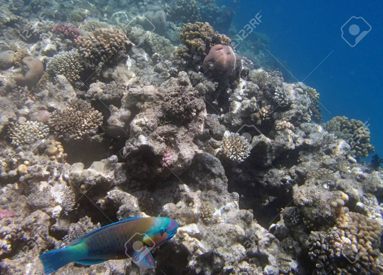 snorkeling in red sea Stock Photo - 20827805