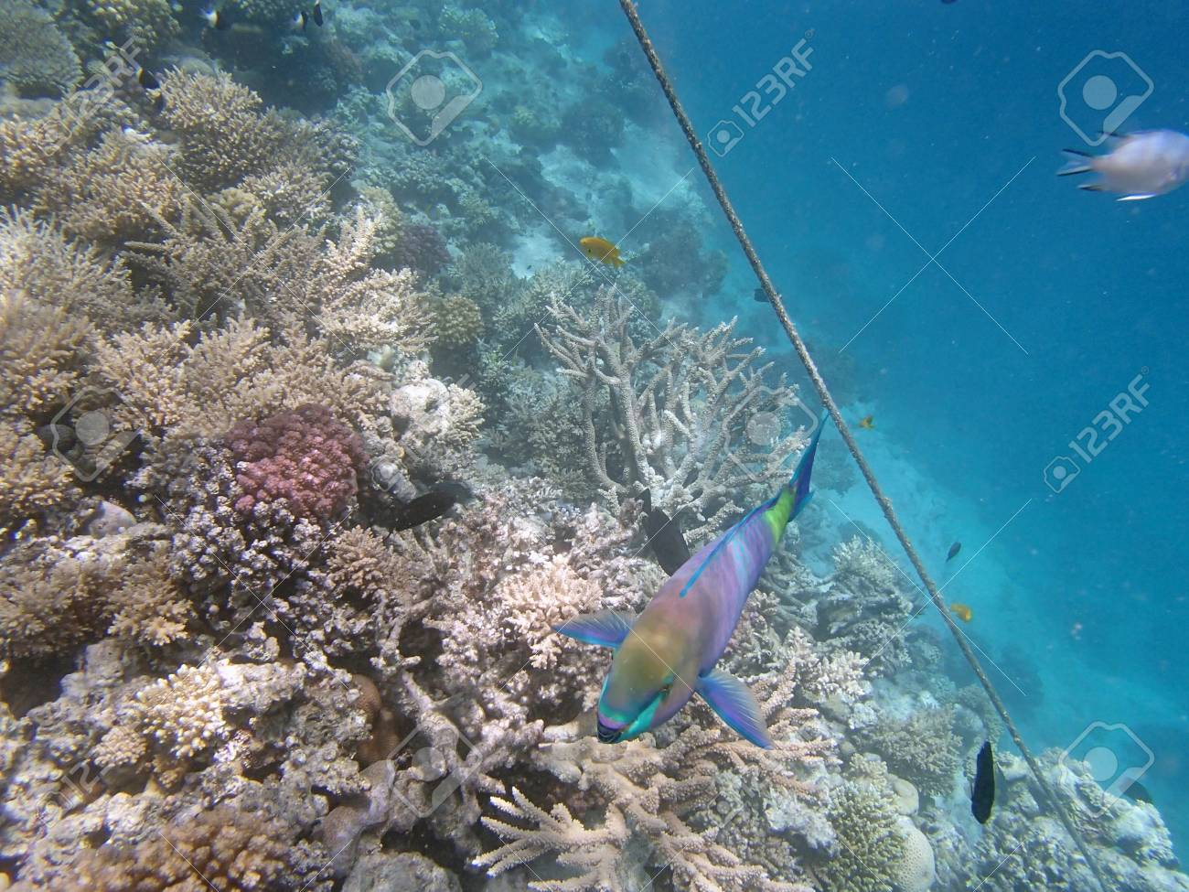 snorkeling in red sea Stock Photo - 20827838