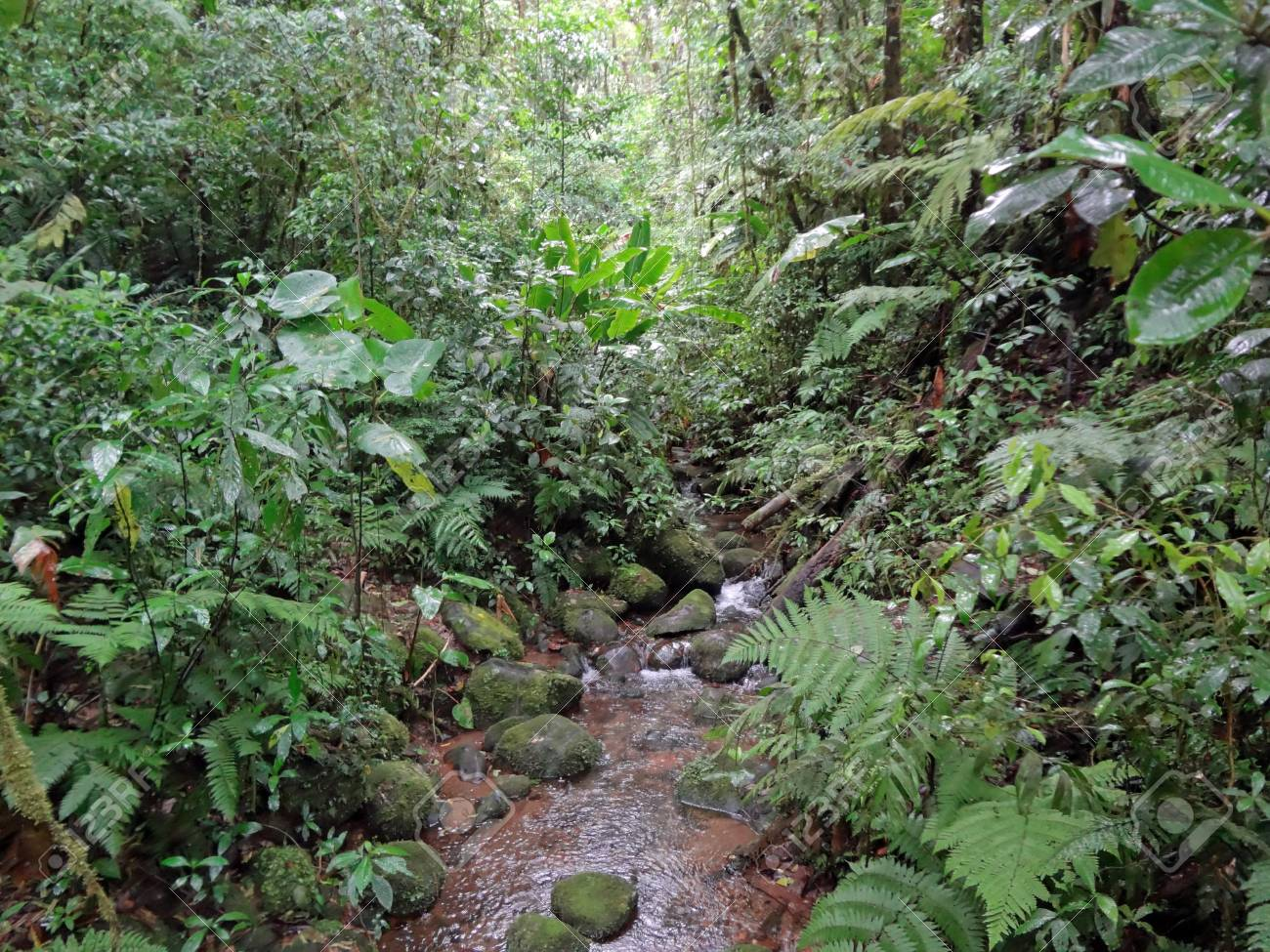 Cool Landscapes Costa Ricas Cloud Forests
