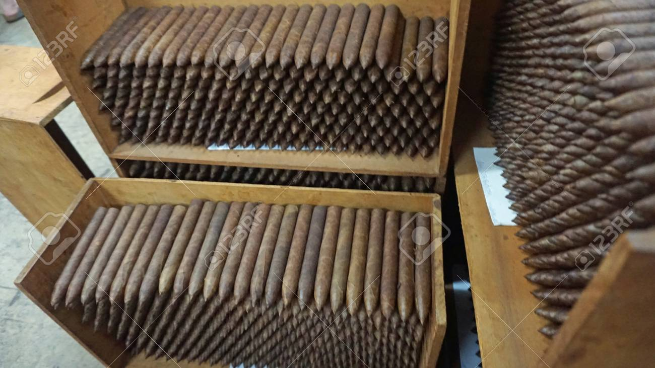 handmade cigars from a plant in the dominican republic
