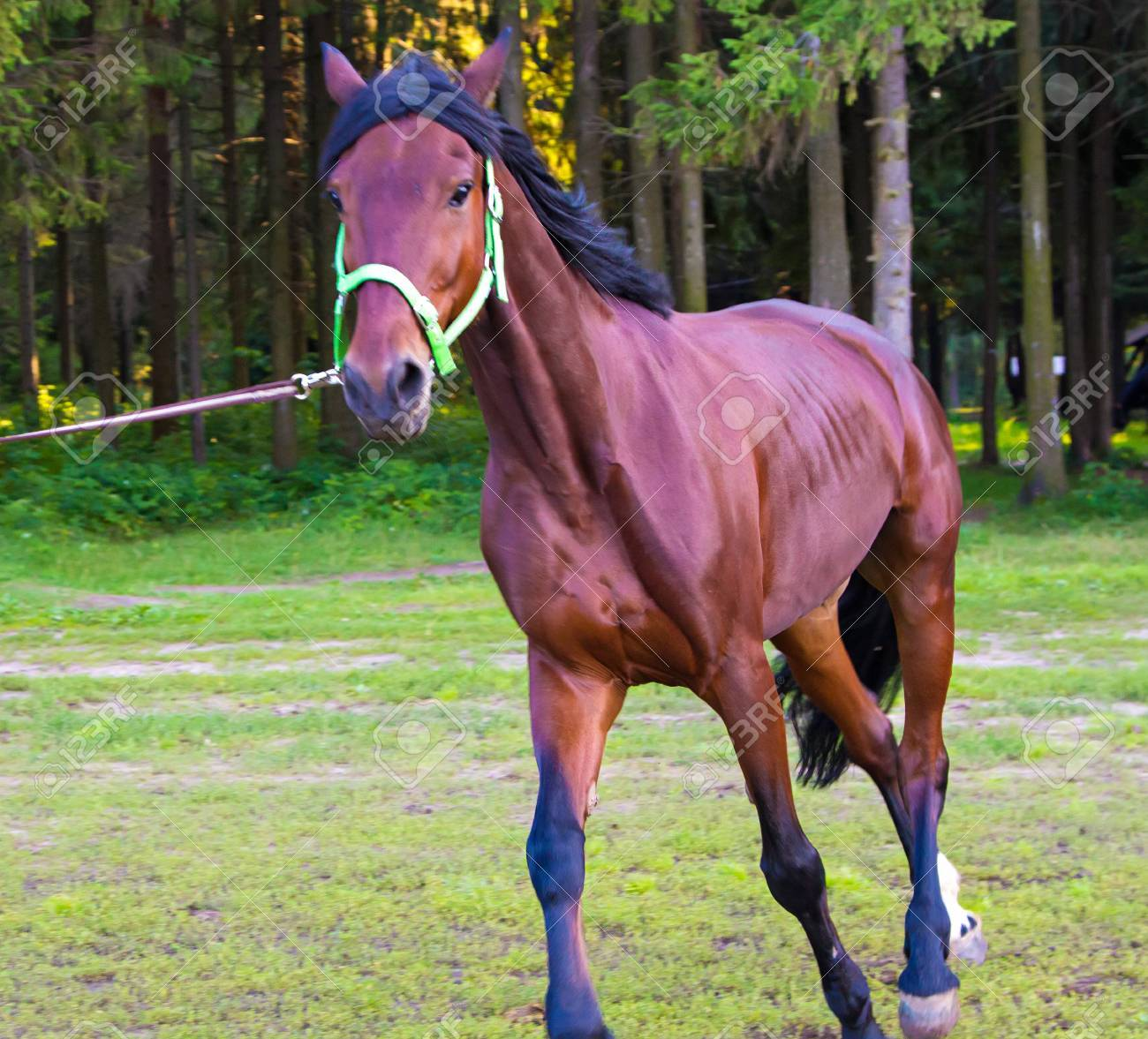 Light Brown Horse Running Photo Of Horses In Nature Stock Photo Picture And Royalty Free Image Image 48491165