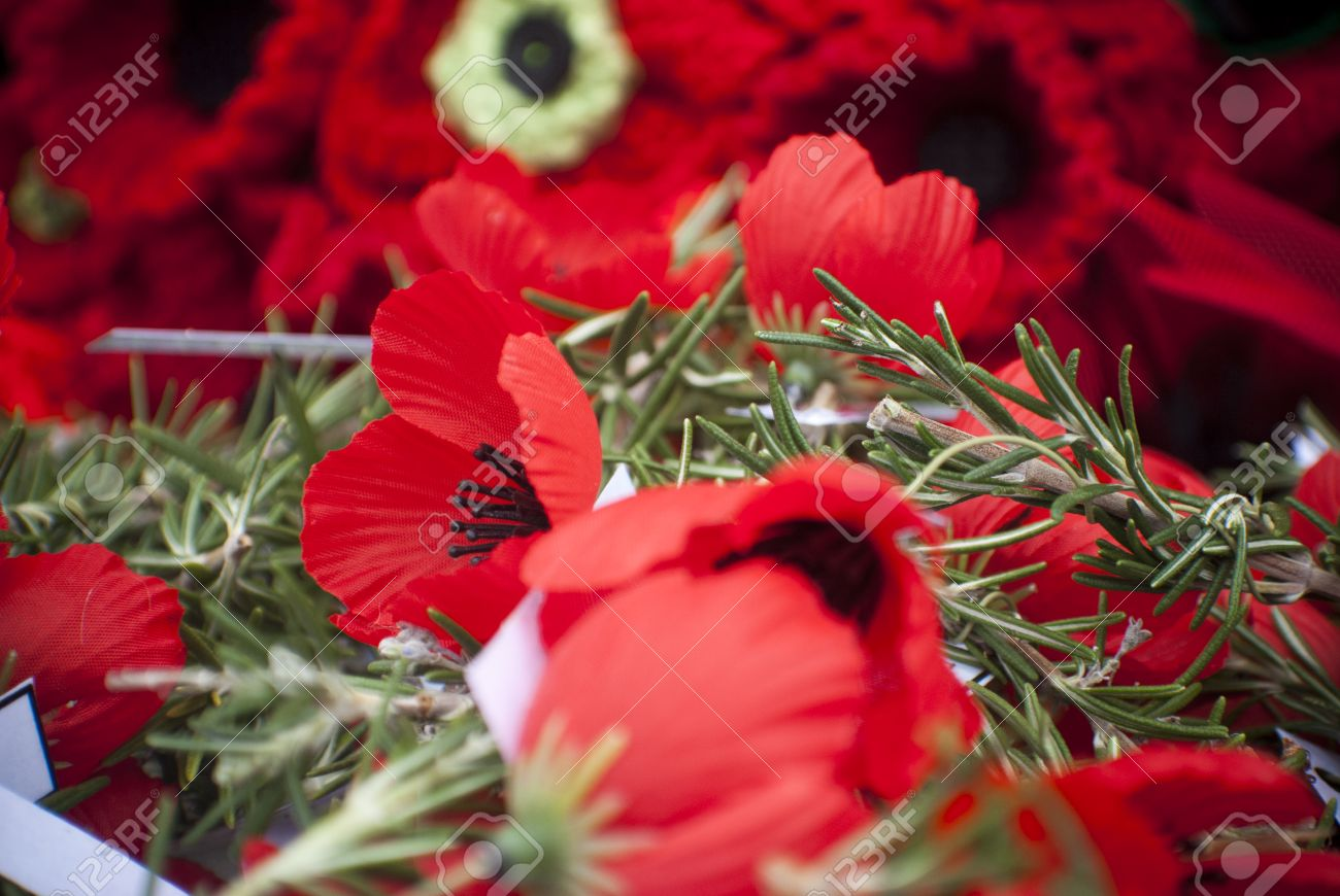 poppies and rosemary on anzac day remembrance day stock photo