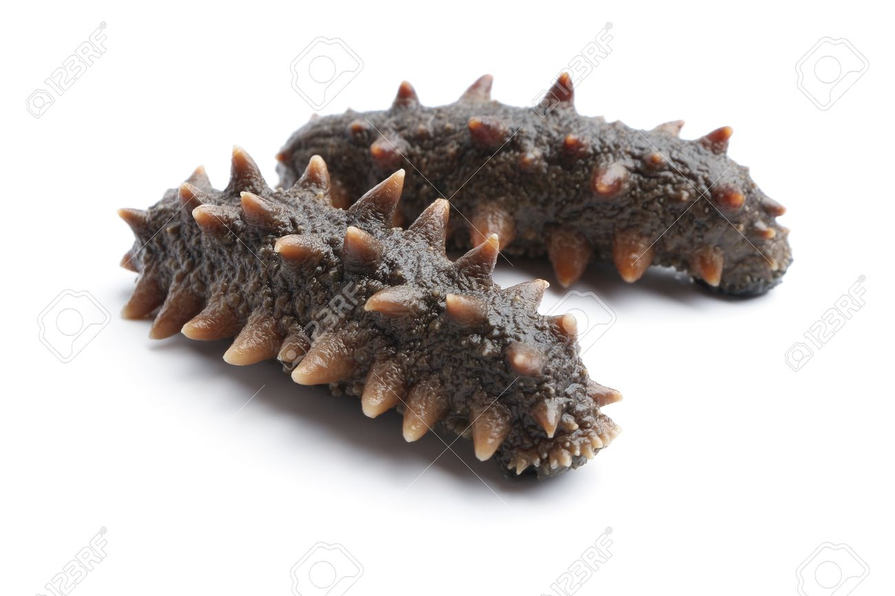 Sea cucumber is isolated on white background. - 42086259