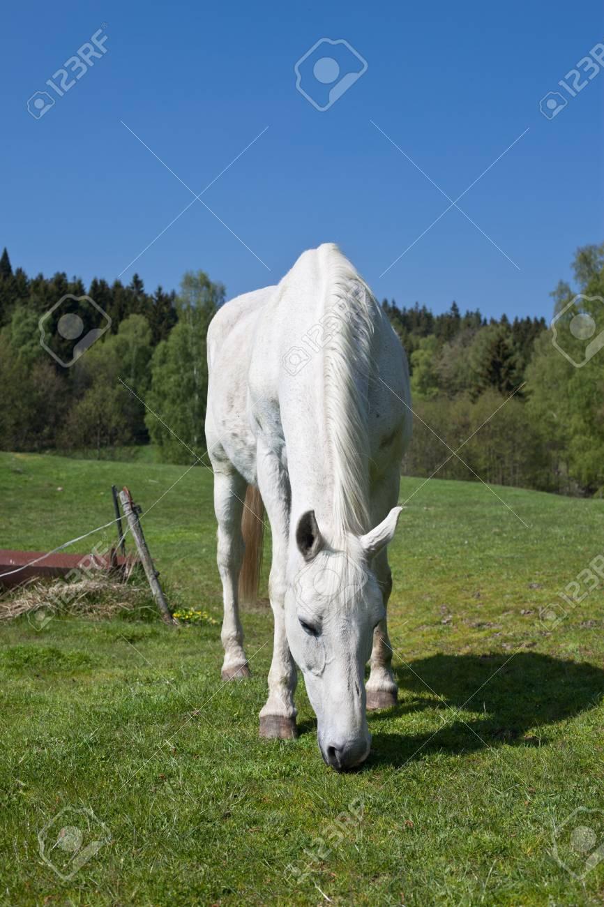 Horse grazing Stock Photo - 13227635