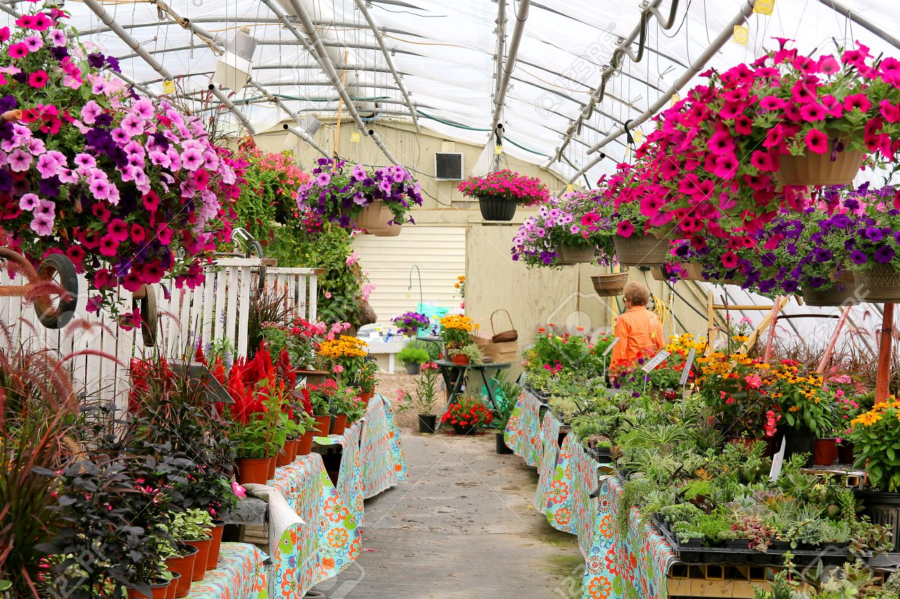 Outdoor Flowers For Sale Part - 20: An Outdoor Greenhouse Is Filled With Beautiful Summer Flowers For Sale  Stock Photo - 30596934