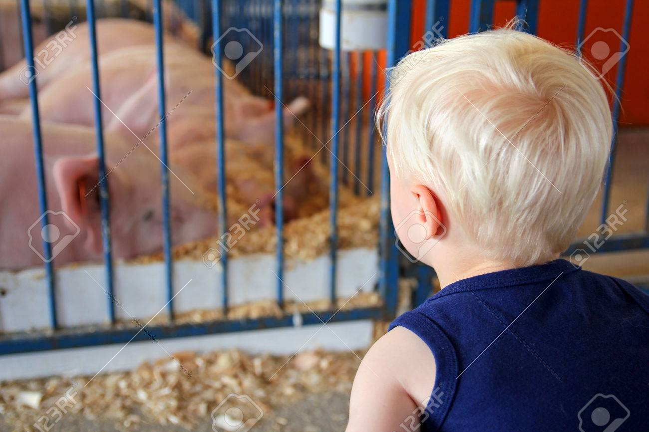 A young child is looking at a pig in a pen at an American County Fair - 30596625