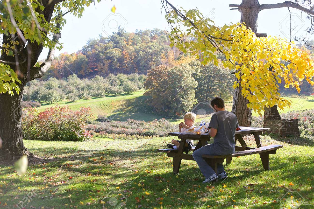 A father and son eat a picnic outside under a maple tree by a sweeping Landscape of Cain's Apple Orchard in Hixton Wisconsin, with Apple trees, blueberry Bushes and grape vinyard. - 46334273