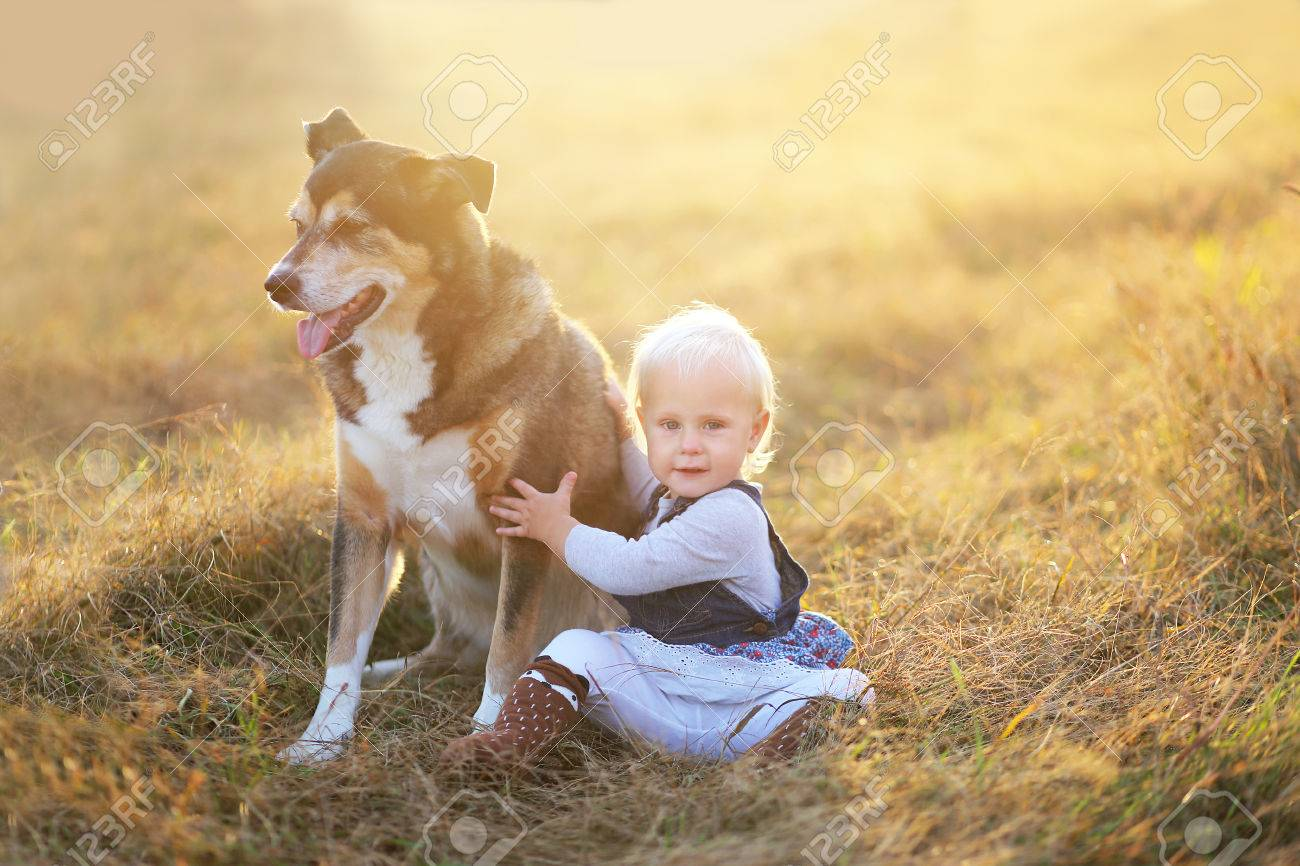 A happy one year old baby girl child is sitting in a farm field at the golden hour of sunset on a fall day, relaxing with her rescued german shepherd mix breed dog. - 67736658