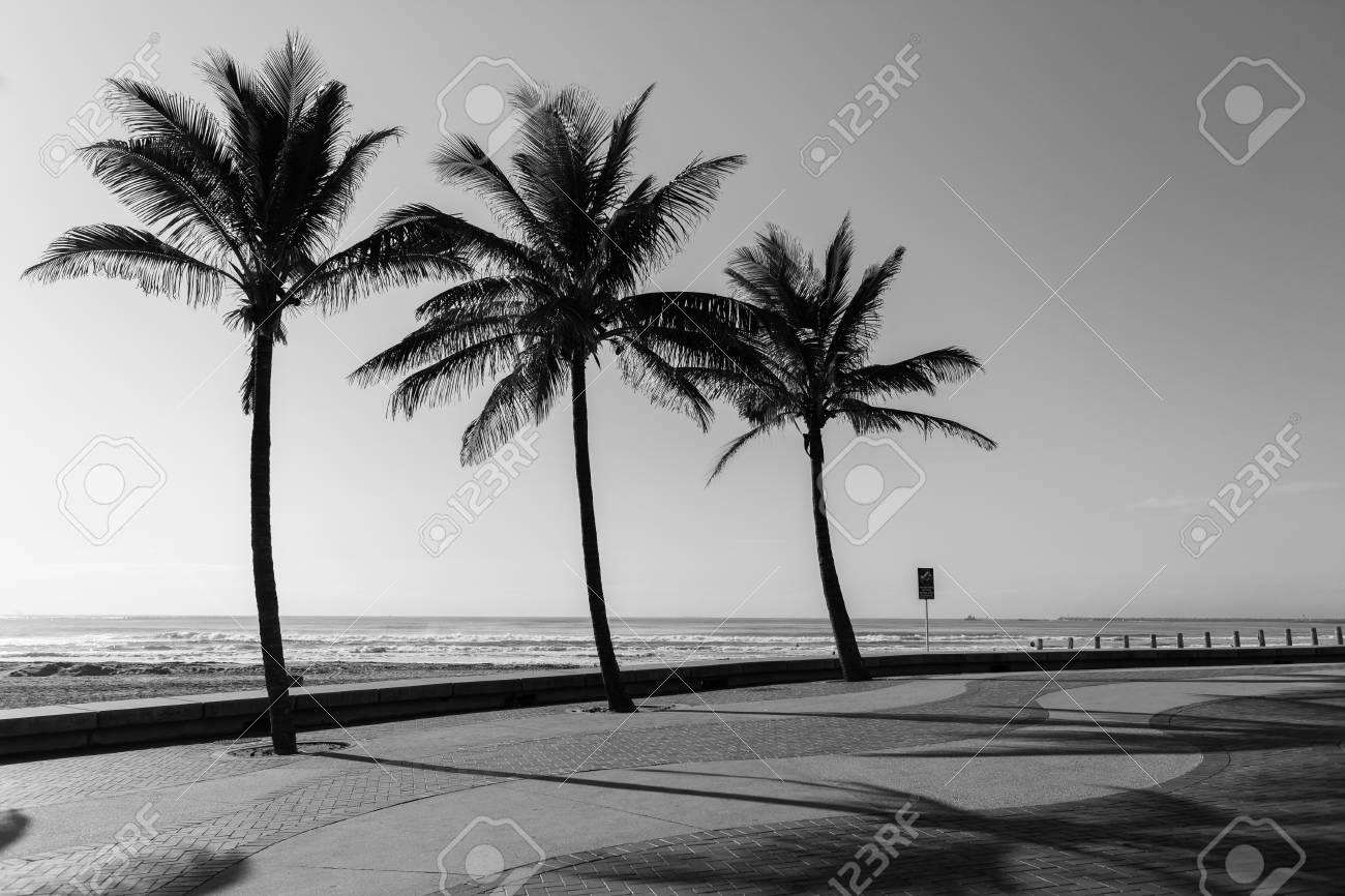 Beach ocean promenade palm trees black and white landscape