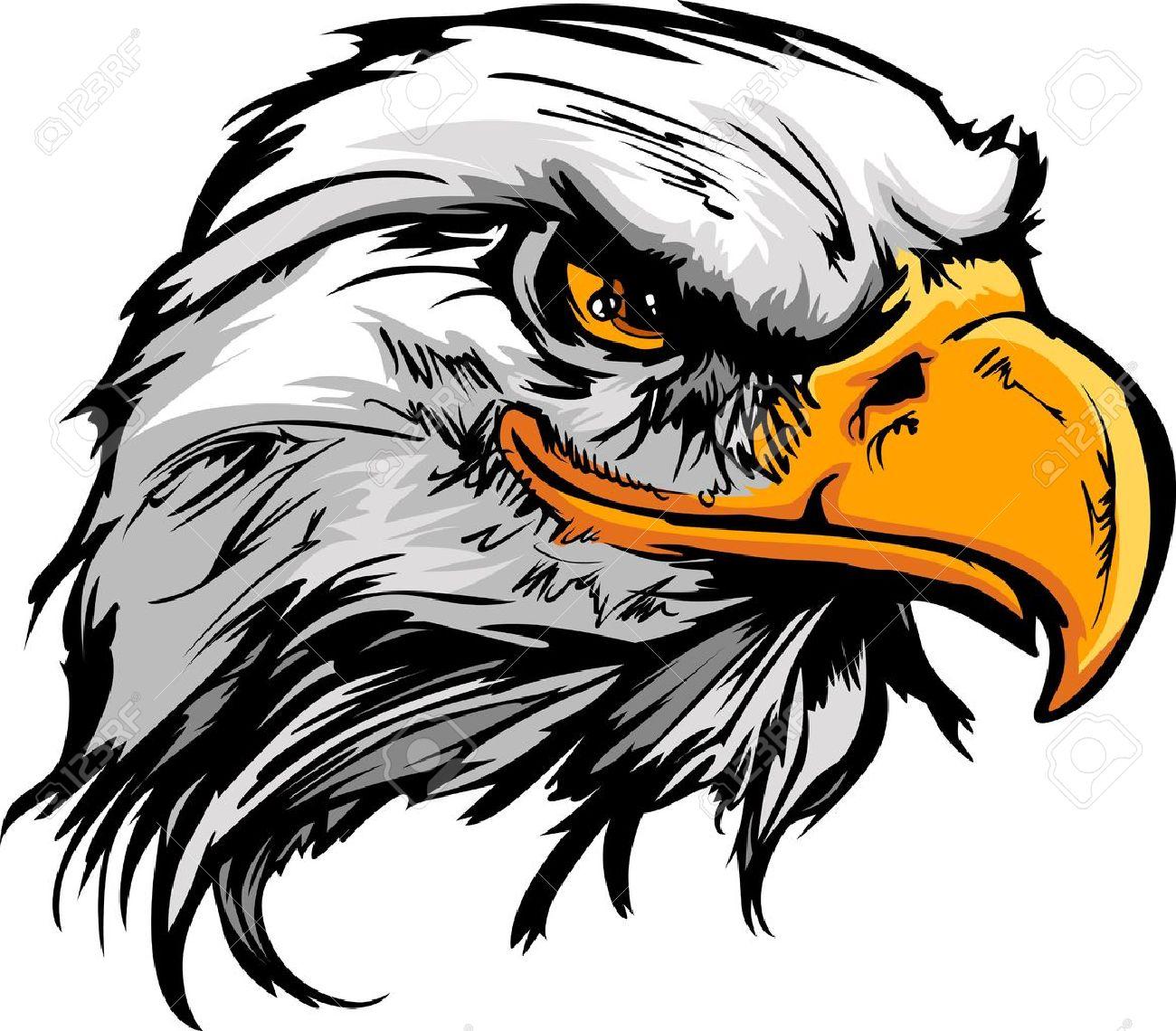 Eagle Head Bald Eagle or  Eagle Head Png