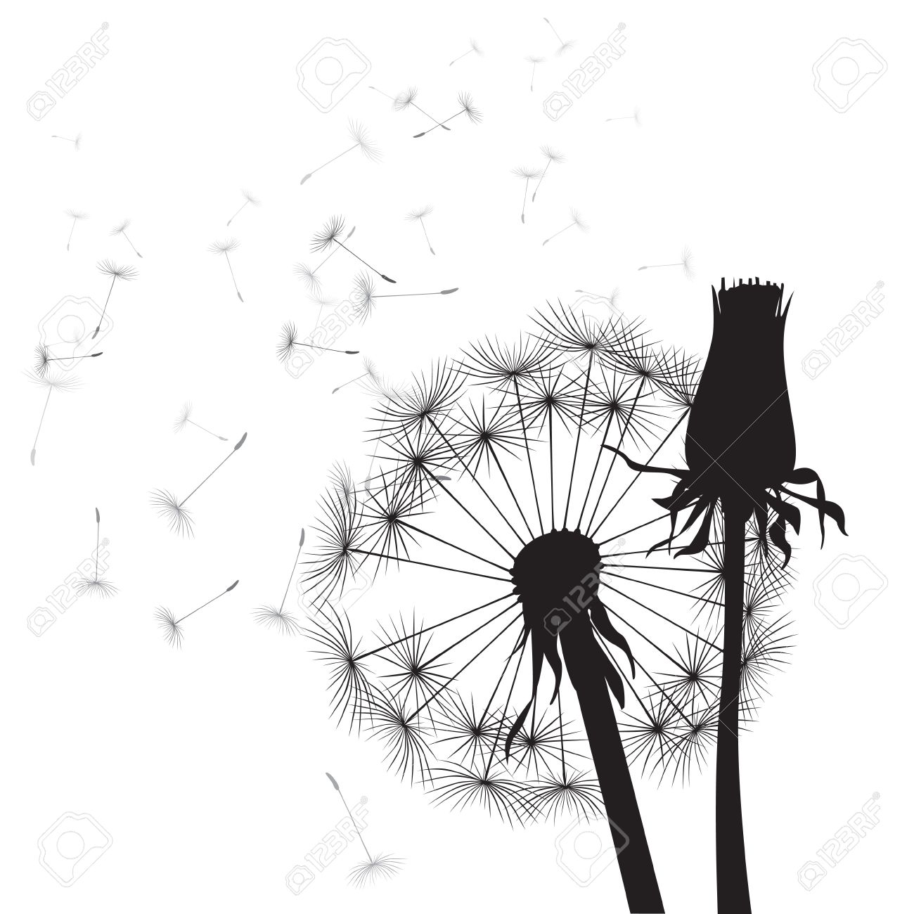 black and white vector dandelions - 28869853