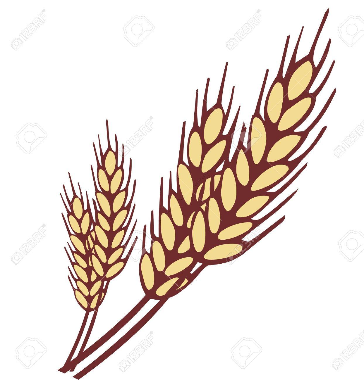 Wheat ear Stock Vector - 18010398