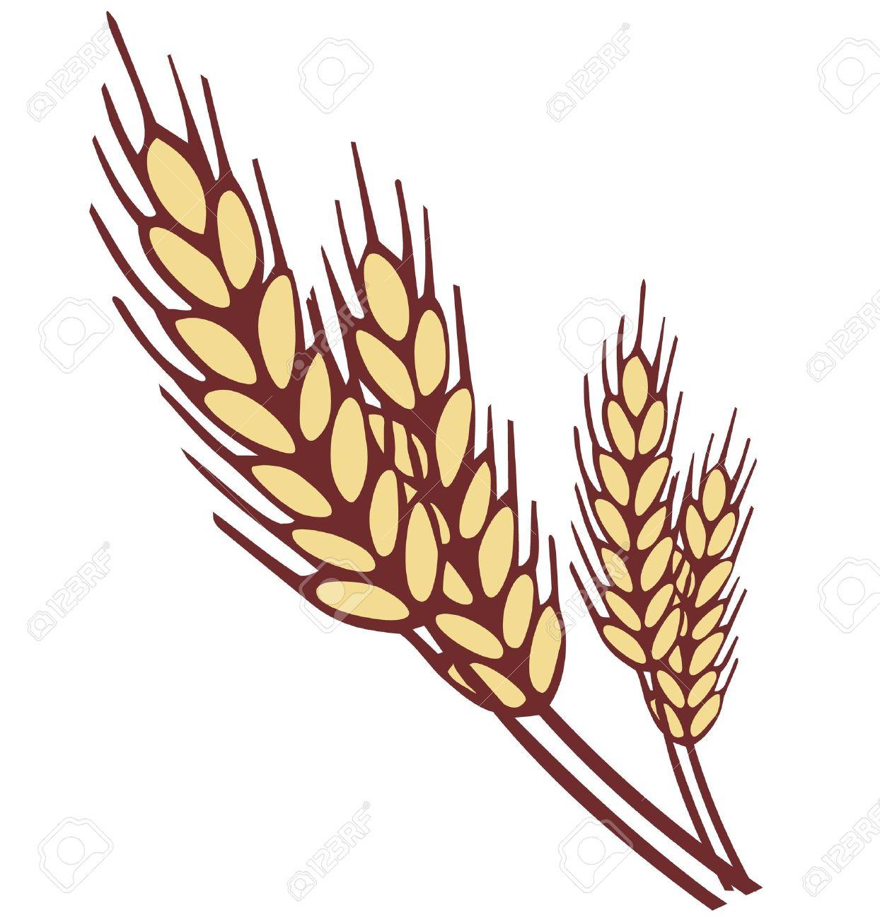 wheat ear royalty free cliparts vectors and stock illustration rh 123rf com clip art of wheat stalks clip art of wheat rye barley