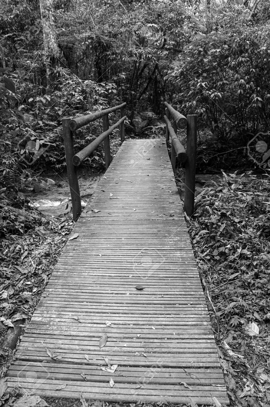 Bridge Of Woods Creek Rustic Nature Walkway Trail Forest Black White Stock Photo
